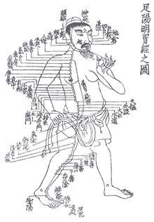 Os meridianos do nosso corpo